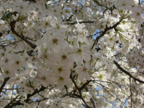 A Glimspe of Spring